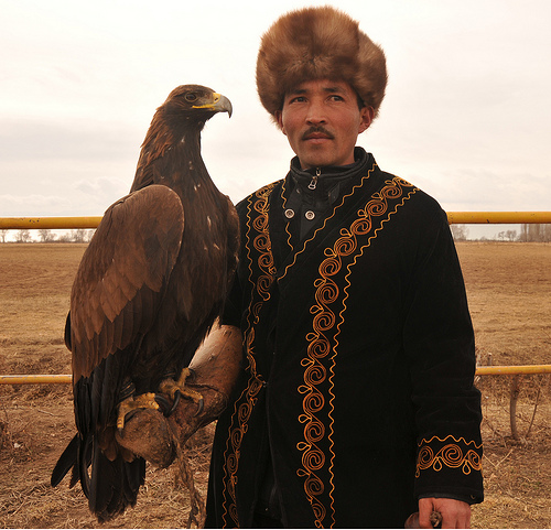 Kirgiz burkut